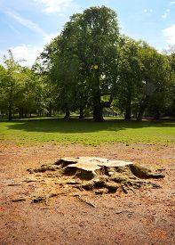 Cut Down Tree In An Open Spot In The Forrest