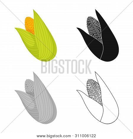 Vector Design Of Cob And Corn Logo. Collection Of Cob And Sweetcorn Vector Icon For Stock.