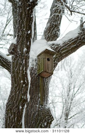Bird house on the tree in winter