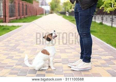 Dog And Owner Jack Russell Terrier In Anticipation Of A Walk In The Park, On The Street, Patient And