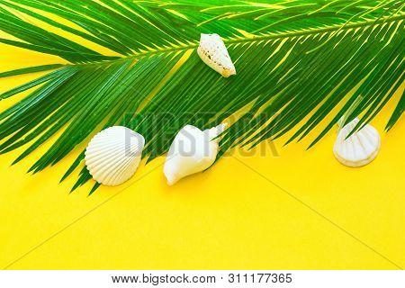 Beautiful Feathery Green Palm Leaf White Sea Shells On Yellow Wall Background. Summer Tropical Nauti