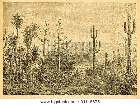 Mexikanska landskap - gammal illustration av okänd konstnär från Botanika Szkolna na Klasy Nizsze, författare