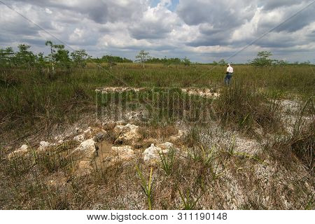 Everglades Limestone Bedrock Exposed During Extreme Drought Conditions In Everglades National Park,
