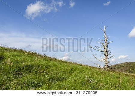 Bare Tree On Mountain Top Of Roan Highlands - North Carolina