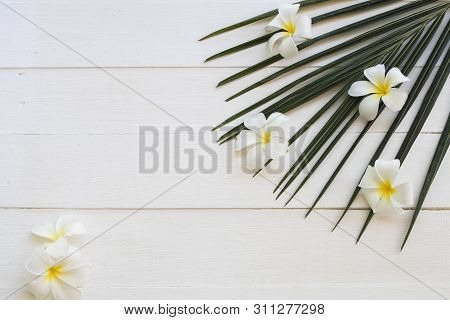 White Flowers Frangipani And Coconut Leaf Arrangement Flat Lay Postcard Style On Background White Wo