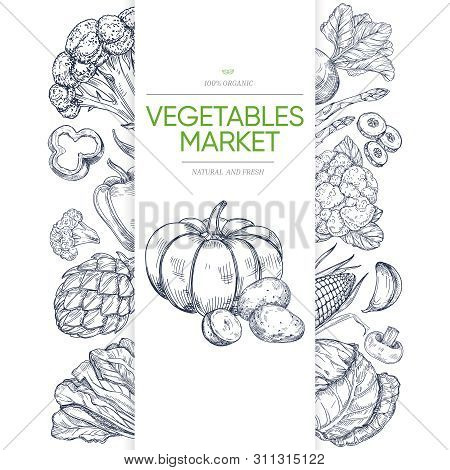 Vegetable Markets Banner Template With Hand Drawn Green. Illustration Of Vegetarian Healthy Vegetabl