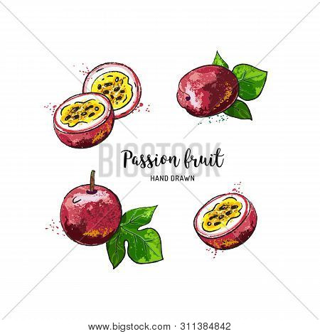 Passion Fruit Drawing, Passion Slice And Whole Juicy Fruit. Watercolor Passion Fruit On A White Back