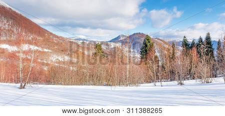 Beautiful Winter Panorama In Mountains At Sunset. Leafless Birch Trees On Snow Covered Meadow In Eve