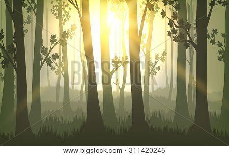 Tree Trunks Background. Sunset In Forest, Vector Nature Serene National Park Landscape, Summer Wildl