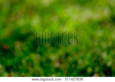 Blurred Fresh Green Grass Field In The Early Morning. Green Leave With Bokeh Background In Spring. N