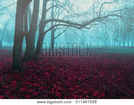 Fall November foggy landscape. Deserted fall park with bare trees and dry fallen red fall leaves, mysterious fall nature view. Foggy fall park landscape, fall foggy weather