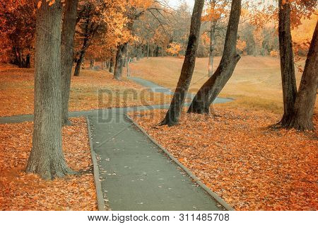 Fall landscape with colorful fall trees and yellow fallen leaves. Fall deserted alley in the city fall park