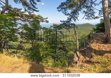 Beautiful Pine Tree On A Mountain In Crimea