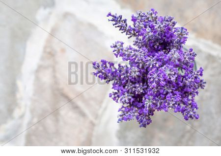 Bouquets Of Lavender On A Concrete Background. Medicinal Plants. Aromatherapy. Summer Mood. View Fro