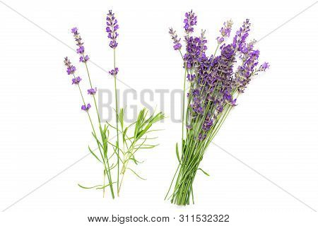 Bouquet Of Lavender On A White Isolated Background. Medicinal Plants. View From Above.