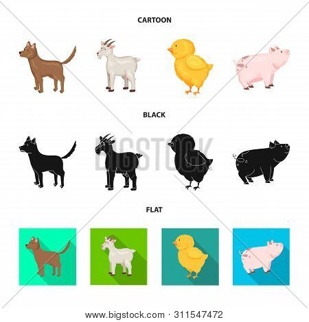 Vector Illustration Of Breeding And Kitchen Sign. Collection Of Breeding And Organic Vector Icon For