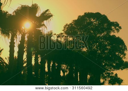 Bright Yellow Sun Among Dark Green Palm Trees In Front Of The Colorful Sky During The Sunset