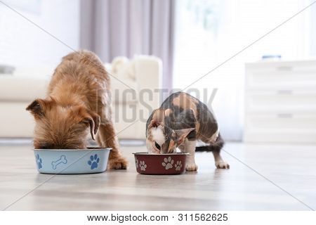 Adorable Dog And Cat Eating Pet Food Together At Home. Friends Forever