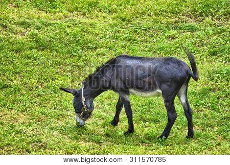 A Donkey In Captivity