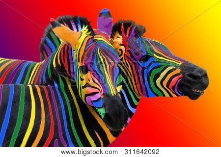 Two Colorful Zebra Painted In The Colors Of The Rainbow, Cuddling On A Colorful Bright Background.
