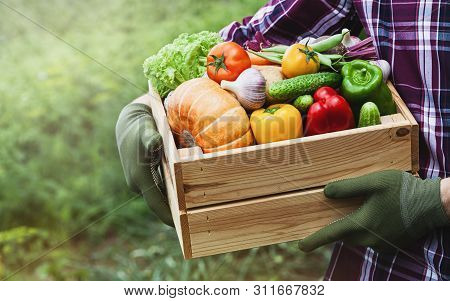 Farmer Holds In His Hands A Wooden Box With A Vegetables Produce On The Background Of The Garden. Fr