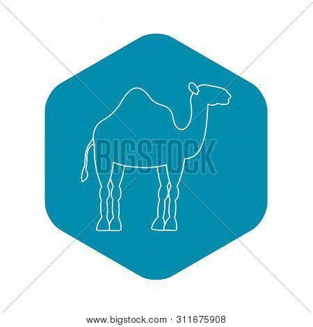 yksikyttyräinen kameli