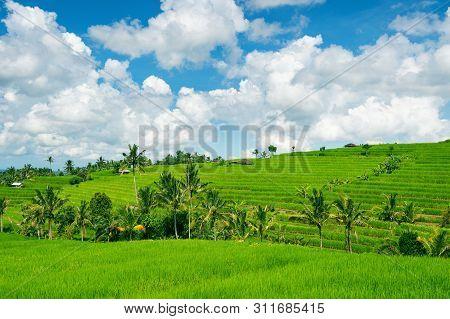 Rice Terrace In Bali Island, Indonesia.