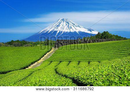 Fuji Mountains And Green Tea Plantation In Shizuoka, Japan.