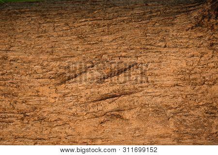 Details Of Teak Wood Texture, Teak Tree Texture, Teak Stem Texture