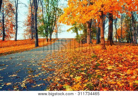 Autumn landscape - yellowed autumn trees and fallen autumn leaves in city autumn park alley in soft evening light. Colorful autumn landscape scene in vintage tones