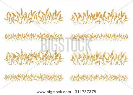 Vector Silhouette Of Wheat. Set. Wheat In A Field On A White Background