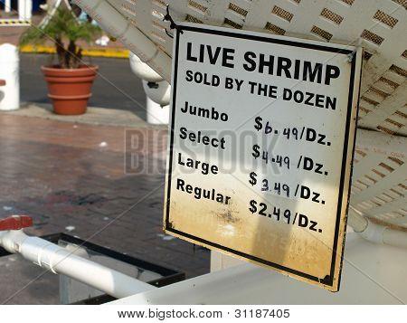 Shrimp for Sale