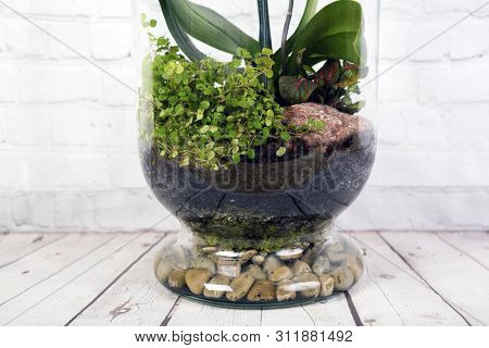 Bottle Terrarium With Plants And Moss.