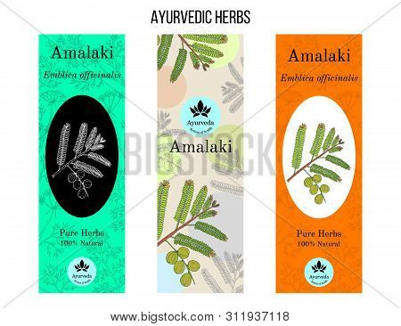 Ayurvedic Herbs Banners, Indian Gooseberry Phyllanthus Emblica , Or Amla, Amalaki. Hand Drawn Botani