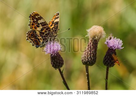 Beautiful Colorful Orange, Yellow And Black Map Butterfly, Spring And Summer Form, Sitting On One Of