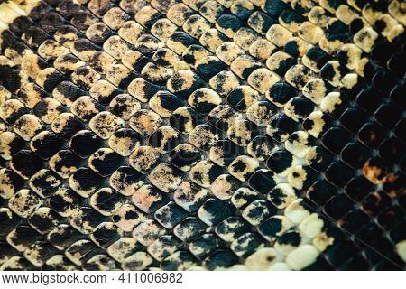 Real Snake Skin Texture, Macro Photo Of Snake Skin