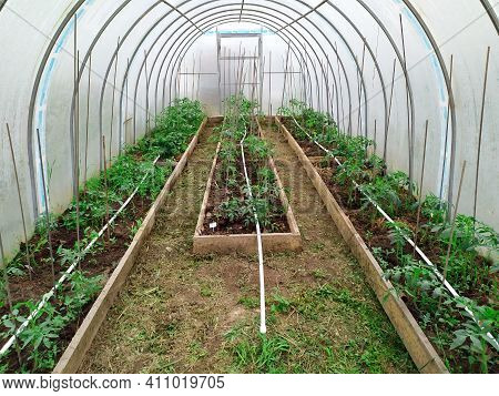 The Planted Tomatoes Are Inthe Greenhouses. There Are Three Beds On The Right, Left And Center. Ther