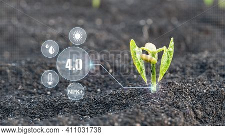 Monitoring The Growth Of Plants. Innovation And Modern Technology Smart Farming, 4.0 Revolution. Qua