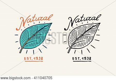 Green Leaves Or Plant Logo. Vegetarian Concept. Organic Vegan Label. Farm Element. Vector Illustrati
