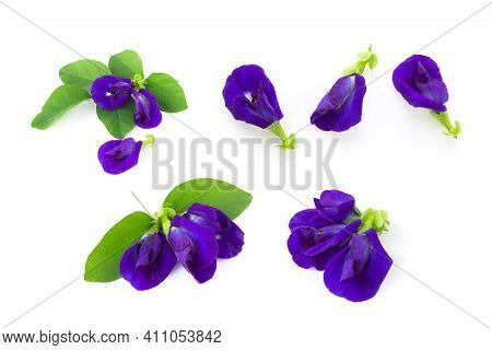Set Of Butterfly Pea Flower On White Background, Herb And Medical Concept