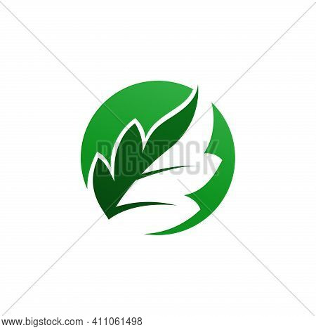 Leaves Logo. Leaves. Leaf Logo. Leaves And Circle Logo. Leaves Vector. Leaves Illustration. Nature L