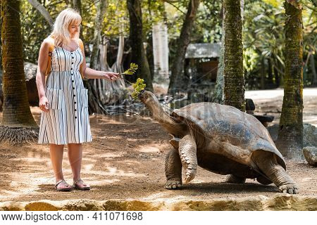 Fun Family Entertainment In Mauritius. A Girl Feeds A Giant Turtle At The Mauritius Zoo