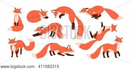 Set Of Cute Red Foxes With Black Paws Isolated On White Background. Happy Funny Forest Animal Runnin