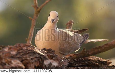 Fotografie Ptáků- Photo Of Birds,bird Photo,ptáci Ve Volné Přírodě -birds In The Wild