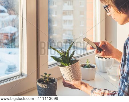 Woman Takes Pictures Of Succulent Plants With Smartphone. Flower Pots On Window Sill. Sansevieria, C