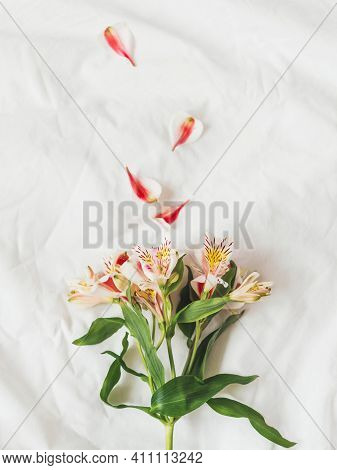 Top View On Fresh Alstroemeria Flower On Crumpled White Background. Spring Flower In Bloom. Seasons