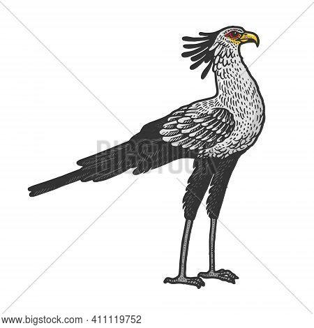 Secretary Bird Animal Color Sketch Engraving Vector Illustration. T-shirt Apparel Print Design. Scra