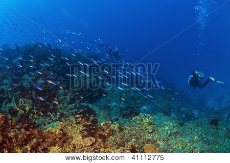 Into The Deep In St Lucia