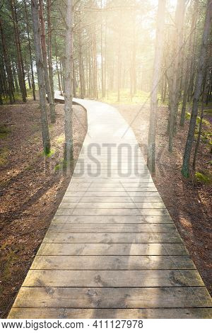 A Wooden Footpath Through The Old Pine Trees. Moss On The Ground. Early Spring In Evergreen Forest.