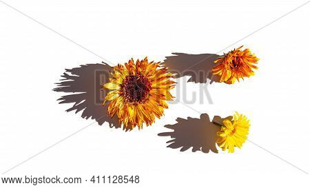 Three Orange Marigold Flowers And Shadows On A Light Background On A Sunny Day. Summer Season, Augus